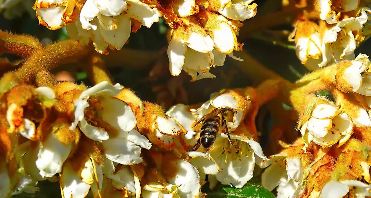 Honing: een bijzaak?
